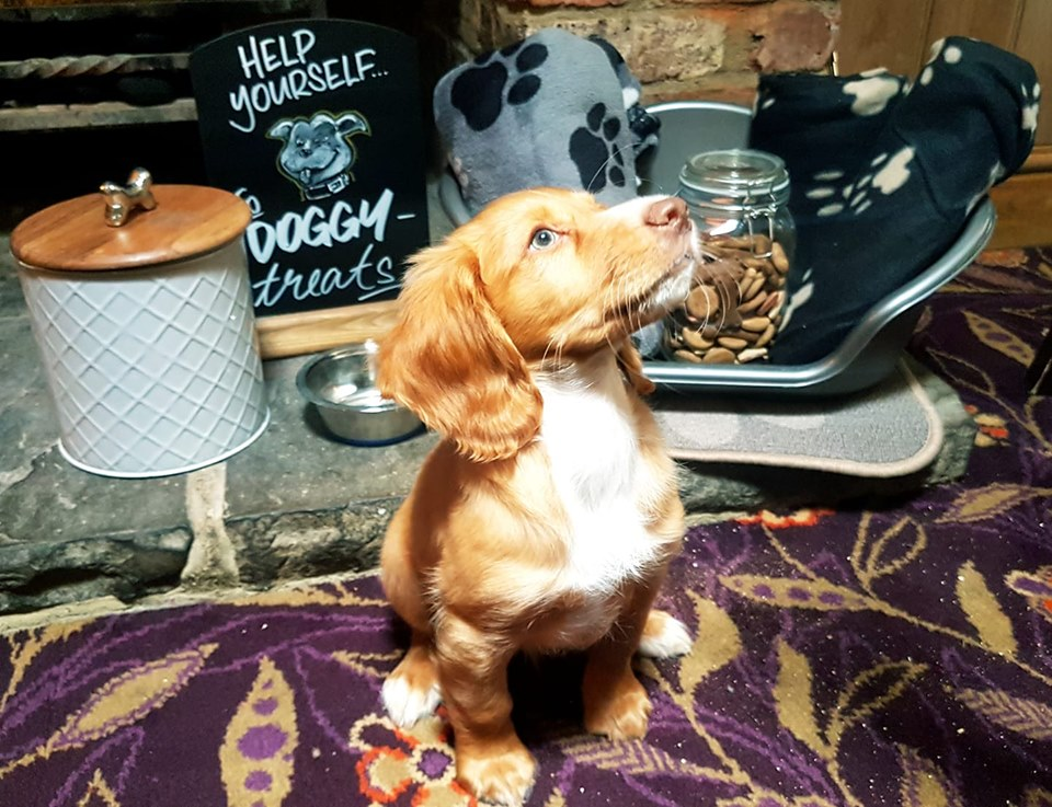 good guide to dog friendly pubs ebook